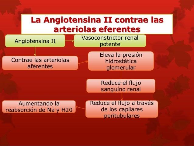 Otros factores que afectan el FSR y el FG:ingestión elevada de proteínas y aumento de glucemia. •Ingestión elevada de prot...