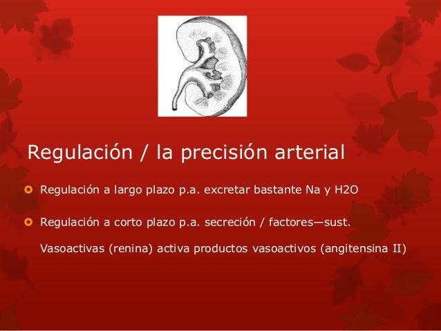 Regulación / la precisión arterial  Regulación a largo plazo p.a. excretar bastante Na y H2O  Regulación a corto plazo p...