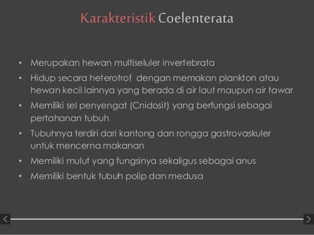 Filum coelenterata