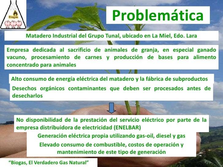 Problemática<br />Matadero Industrial del Grupo Tunal, ubicado en La Miel, Edo. Lara<br />Empresa dedicada al sacrificio d...