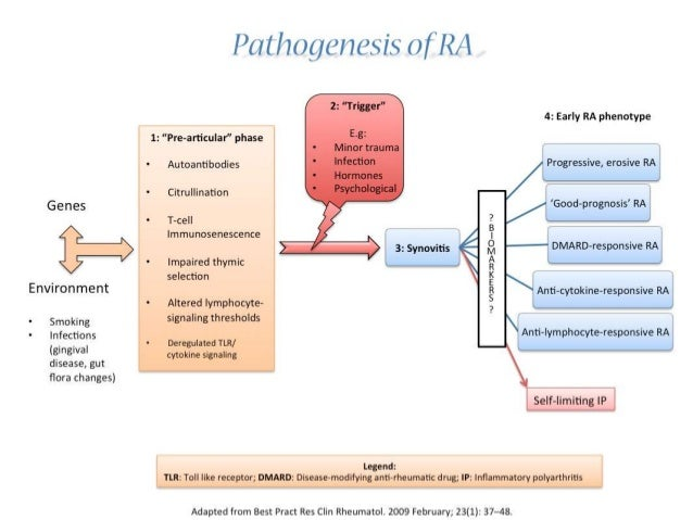 rheumatoid arthritis physiology It is confusing whether polyarthritis, inflammatory arthritis, and rheumatoid arthritis are synonymous with one another learn about these terms.