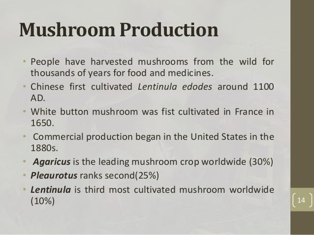 "production of edible mushroom In cameroon, edible mushrooms (macrofungi) are referred to as the ""poor man's  meat"" because it serve as a source of protein for people who."