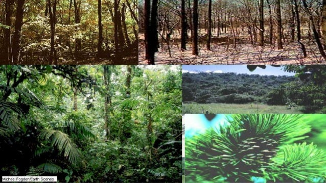 what is a forest ecosystem Learn about forest ecosystems, major ecologic units that exist as a part of the total complex ecological condition.