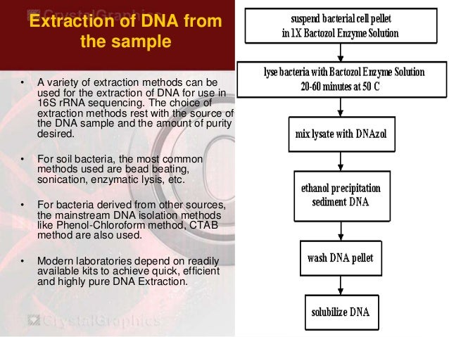 Bacterial Identification by 16s rRNA Sequencing ppt