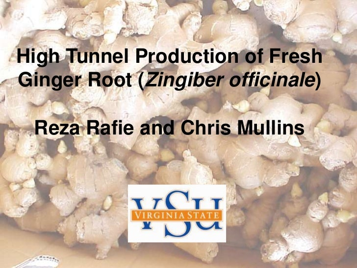 High Tunnel Production of FreshGinger Root (Zingiber officinale) Reza Rafie and Chris Mullins