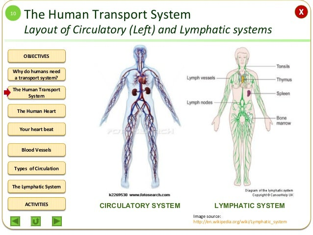 Integrated Science M2 The Human Circulatory System