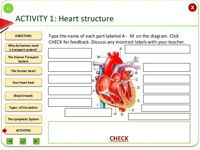 Integrated Science M2 The Human Circulatory System – Circulatory System Worksheet