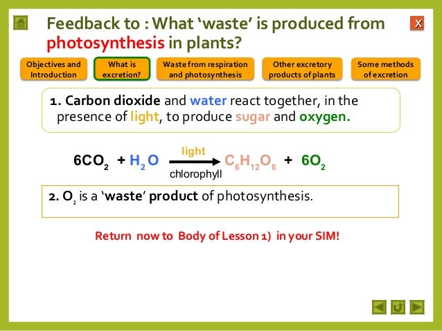 excretion plants integrated science final m2 photosynthesis waste respiration methods some