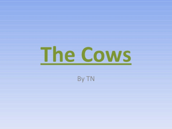 The Cows By TN
