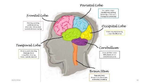 male brain vs female brain 26 01 2016 16