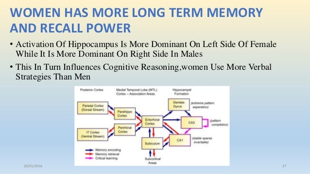 male brain vs female brain women