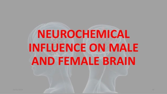 male brain vs female brain Simon baron-cohen¸ the essential difference: male and female brains and the truth about autism basic books: 2003 some definitions and theses from baron-cohen (chapter 1) male brain.