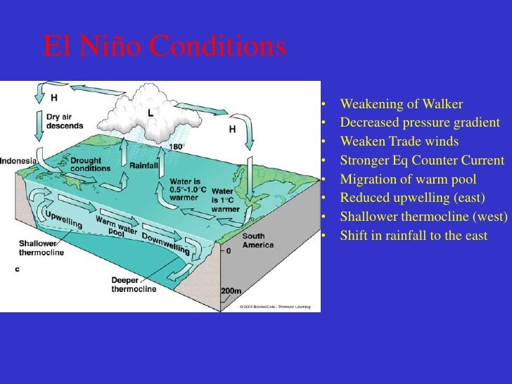 EL NINO SUPRESSES COASTALUPWELLING, REDUCES NUTRIENTS& CAUSES SURFACE POPULATIONS        TO DISAPPEAR.
