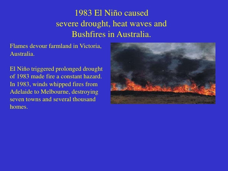 El Niño• During an El Niño year  – normally strong trade winds weaken, and sometimes even    reverse direction  – warm wat...