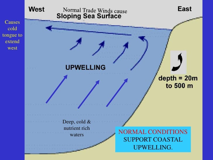 SUNLIGHT ONLY UPWELLING CANRETURN THE FERTILIZINGNUTRIENTS TO THE PHOTIC        ZONE                    NORMAL CONDITIONS ...