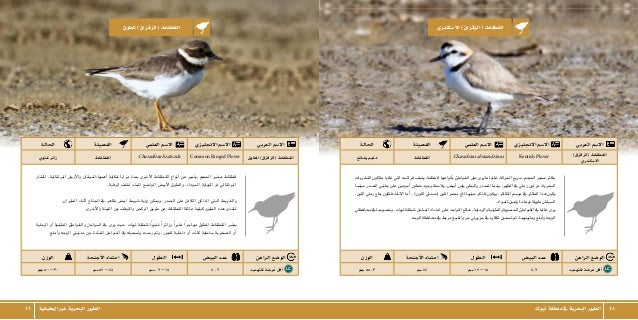 الطيور البحرية في منطقة تبوك