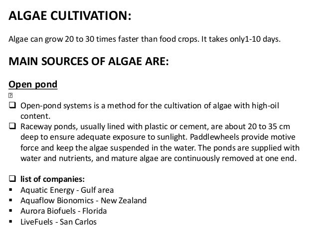 thesis on biodiesel from algae Resources for queensland students & teachers deadly eei research papers on biodiesel from algae ideas ideas for essay by samuel printable example thesis.