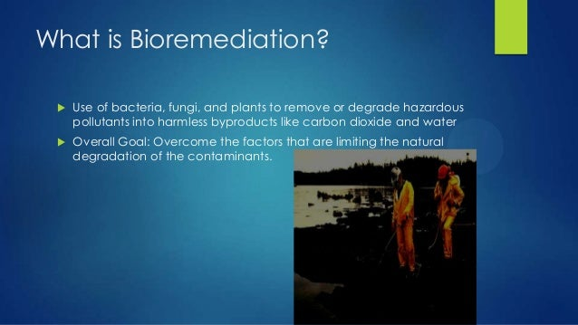 3 Types of Bioremediation Examples