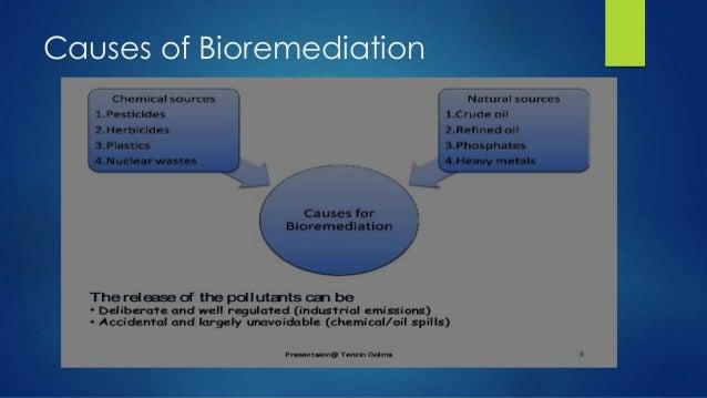 Uses of bioaugmentation