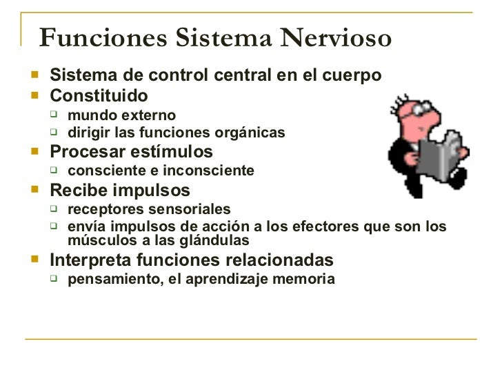 Funciones Sistema Nervioso <ul><li>Sistema de control central en el cuerpo </li></ul><ul><li>Constituido  </li></ul><ul><u...