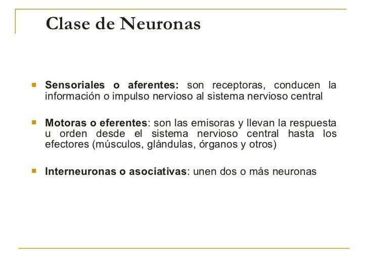 Clase de Neuronas   <ul><li>S ensoriales o aferentes:  son receptoras, conducen la información o impulso nervioso al siste...