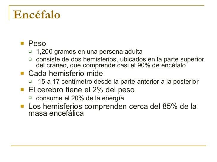 Encéfalo <ul><li>Peso </li></ul><ul><ul><li>1,200 gramos en una persona adulta  </li></ul></ul><ul><ul><li>consiste de dos...