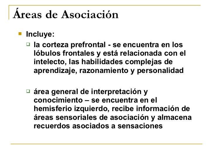 Áreas de Asociación <ul><li>Incluye: </li></ul><ul><ul><li>la corteza prefrontal - se encuentra en los lóbulos frontales y...