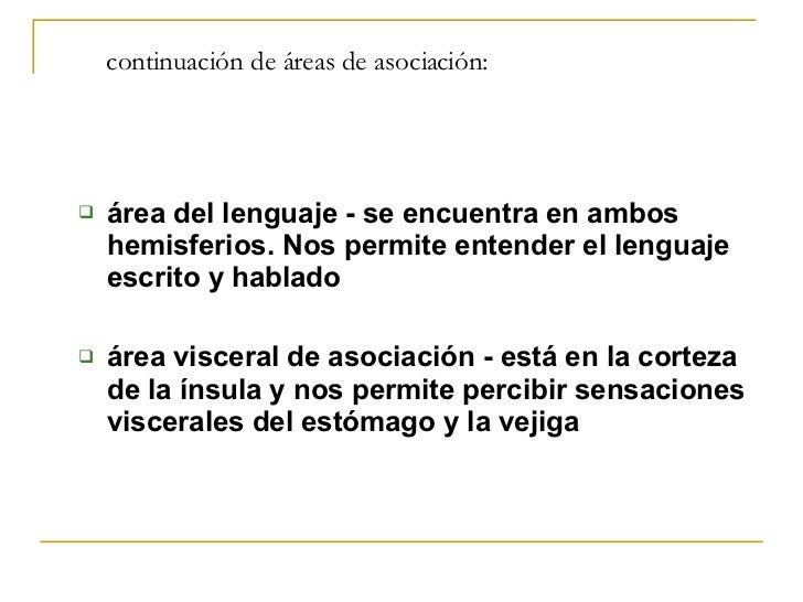 continuación de áreas de asociación: <ul><ul><li>área del lenguaje - se encuentra en ambos hemisferios. Nos permite entend...