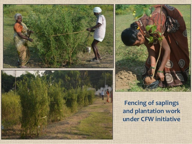 Fencing of saplings and plantation work under CFW initiative