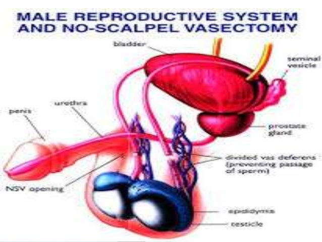 contraception and infertility Can birth control harm your fertility many hormonal contraceptive choices have  risks, but infertility is not one of them according to numerous.