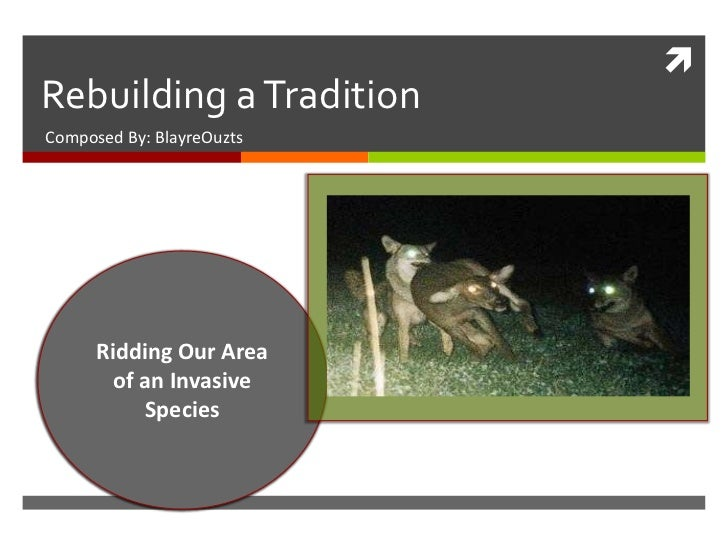 Rebuilding a TraditionComposed By: BlayreOuzts      Ridding Our Area        of an Invasive           Species