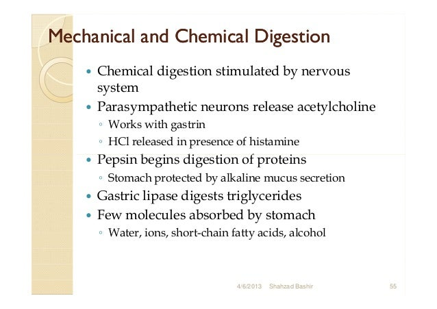 final digestive system., Cephalic Vein