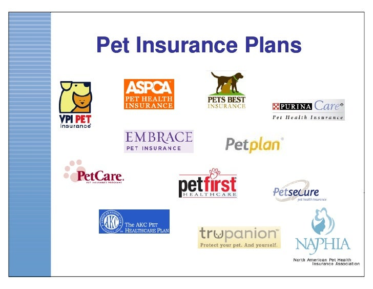 Final Educational Pp Pet Insurance & Your Veterinary Practice