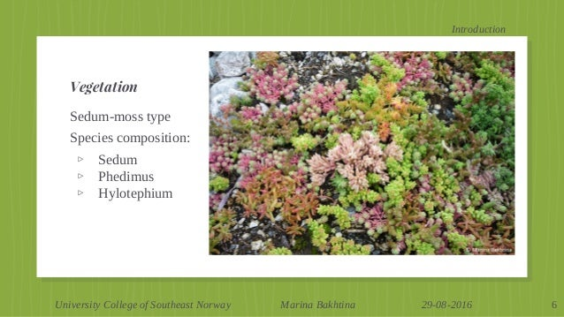 Vegetation Composition Of Extensive Green Roofs In Oslo