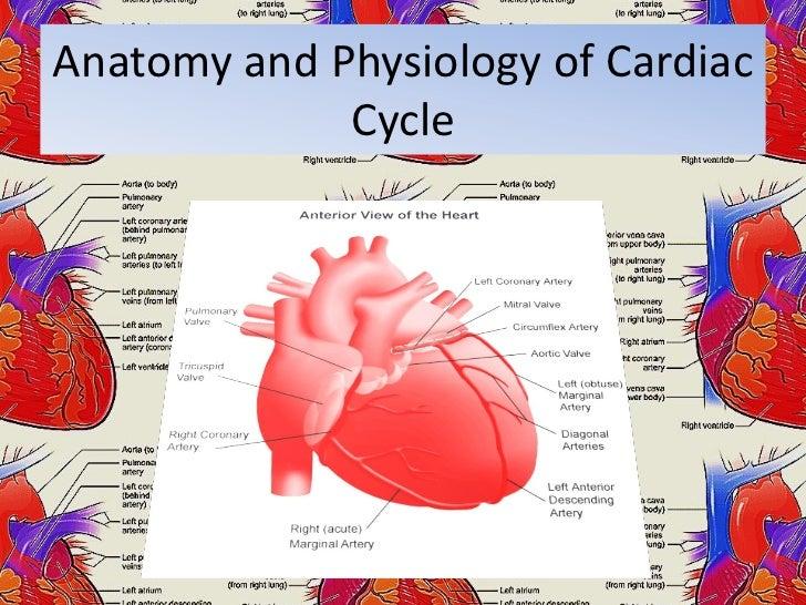 Anatomy and Physiology Essay Sample