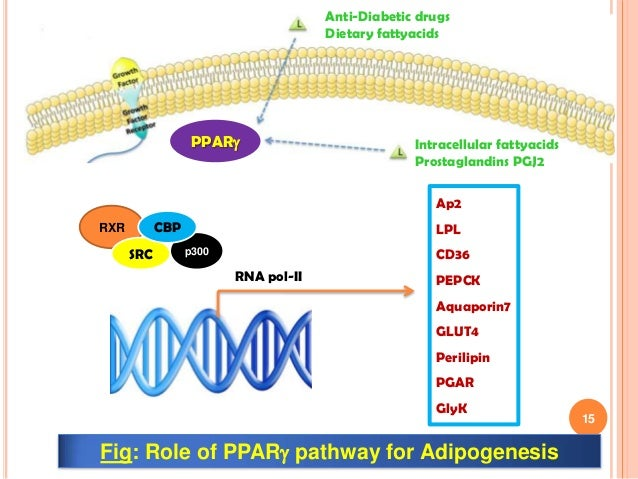 Fat and Beyond: The Diverse Biology of PPAR gamma