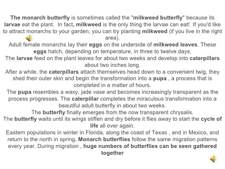"""The monarch butterfly  is sometimes called the """" milkweed butterfly """" because its  larvae  eat the plant. In fa..."""