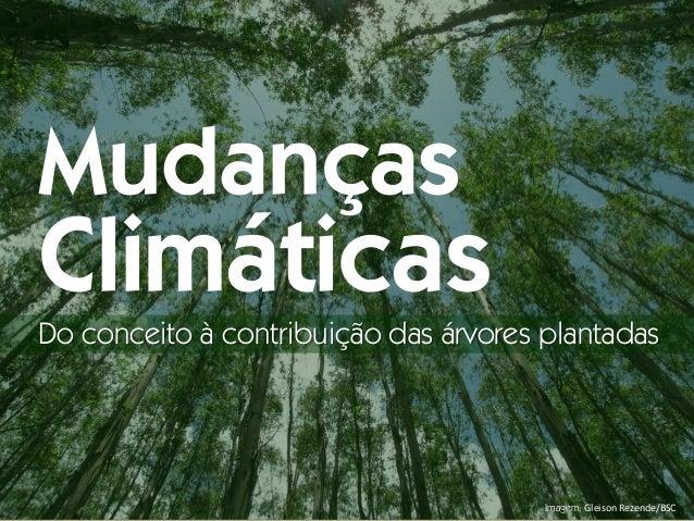 Imagem: Gleison Rezende/BSC Mudanças Climáticas Do conceito à contribuição das árvores plantadas