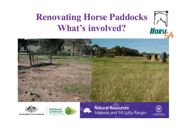 Renovating Horse Paddocks What's involved?