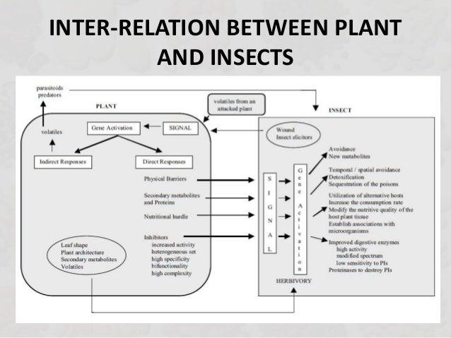 inter relationship between legumes and rhizobium