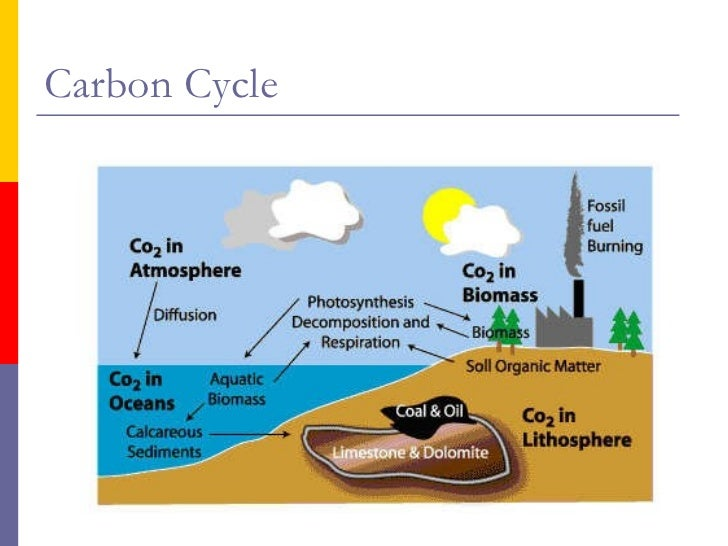 nitrogen cycle diagram cow freshwater wetlands the nitrogen cycle diagram freshwater wetland #14