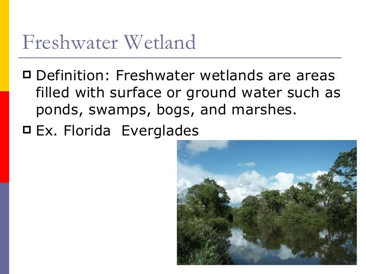 Biotic components of the florida everglades