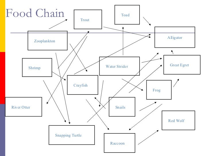 Red Wolf Food Chain Diagram Wiring Diagram For Light Switch
