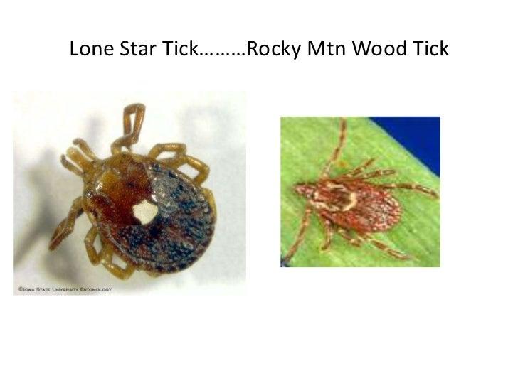 Fluke Tick Tester : Final powerpoint parasites