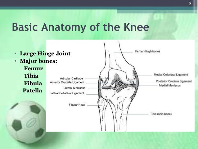Knee injuries in detail knee injuries 2 3 basic anatomy ccuart Choice Image