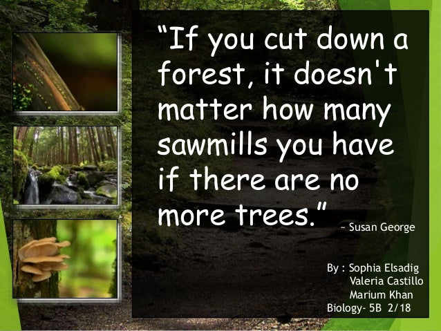 """""""If you cut down a forest, it doesn't matter how many sawmills you have if there are no more trees."""" ~ Susan George By : S..."""