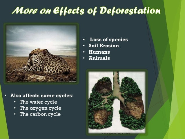 the harmful effects of deforestation in the environment How does littering affect the environment what are the causes and negative effects of oil pollution what are the dangers of deforestation to the environment.