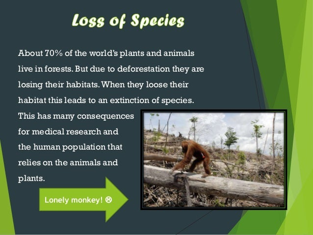 danger of deforestation essay Deforestation essay deforestation is the clearing and destruction of forests the food and agriculture organization of the united nations (fao) estimates that deforestation accounts for the loss of 13 million hectares of forests annually.