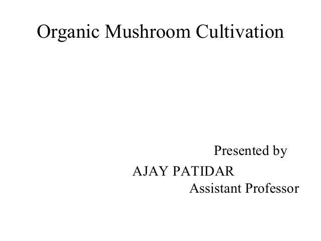 Organic Mushroom Cultivation Presented by AJAY PATIDAR Assistant Professor