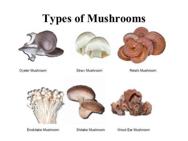 Final ppt on mushroom 12 toneelgroepblik Image collections